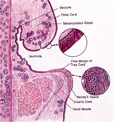 12 - Pituitary and Sellar Region | Histology for Pathologists