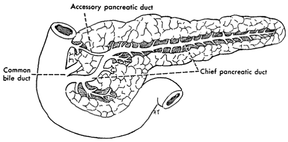 23 stomach histology for pathologists ccuart Choice Image
