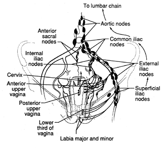 Human abdomen additionally Thysanoptera together with Search moreover Left Side Abdominal Pain Symptoms Causes Treatment likewise Examen De Las Partes Del Cuerpo. on female bladder
