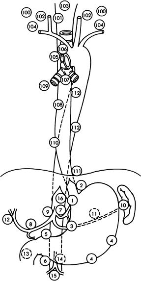 da2db3dc1c124ff2 Esophagus anatomy