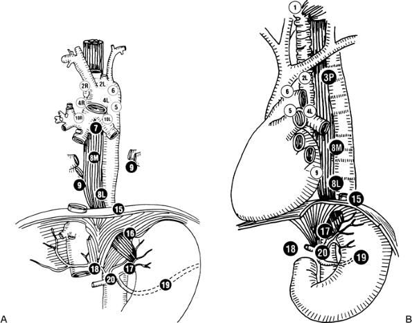 da2db3dc1c124ff3 Esophagus anatomy